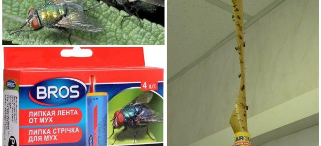Handla och folkmekanismer för flugor