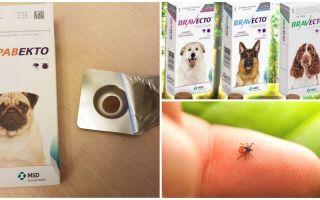 Tabletter Bravekto från fästingar till hundar