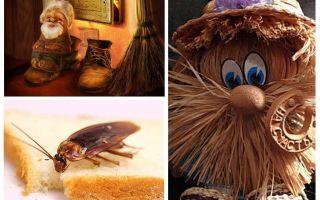 Konspiration - hur man blir av med kackerlackor i en lägenhet en gång för alla