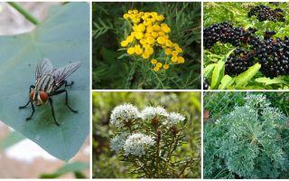 Vilken lukt är rädd flyger och myggor