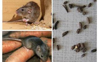 Hur man hanterar råttor i ett privat hus
