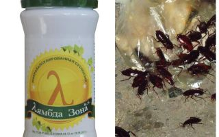 Lambda Probe Remedy för kackerlackor
