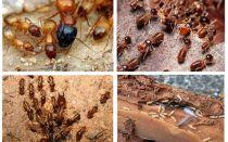 Vem är termiterna