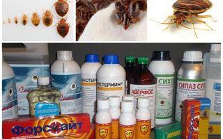 Gift för bedbugs hemma