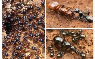 Steg av myrutveckling