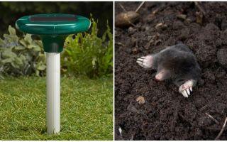 Mole repellers - ultraljud, elektroniska och andra typer