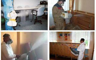 Hot dammbehandling för bedbugs
