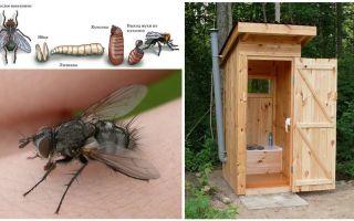 Hur bli av med flugor i toaletten på gatan