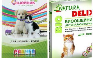 Flea krage för kattungar