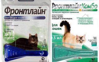 Frontline loppdroppar för katter