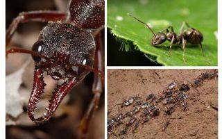 Allt om myror
