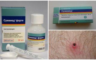 Antibiotika efter en fittabit