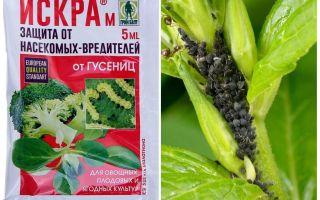 Spark aphid preparation