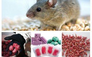 Gift för råttor och möss
