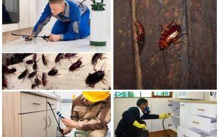 Kämpar kackerlackor i en lägenhet hemma