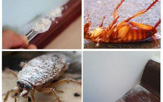 Översikt av kackerlackor