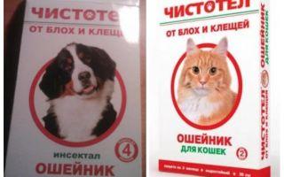 Flea celandine krage för katter och hundar