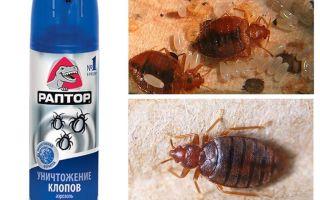 Betydar Raptor från bedbugs