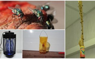 Hur man hanterar flugor i landet