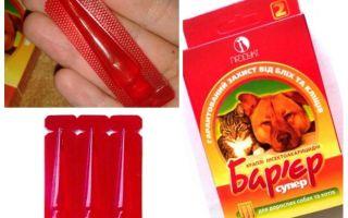 Flea barriär hos katter och hundar