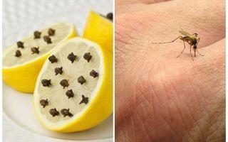 Citron med myggnät för barn och vuxna