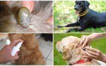 De bästa drogerna för hundar från fästingar och loppor