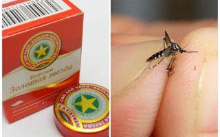 Balsam stjärna mygga