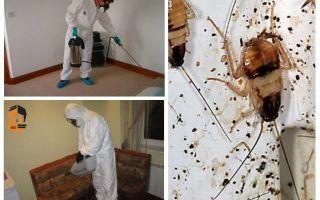 Utrotning av kackerlackor i lägenheten