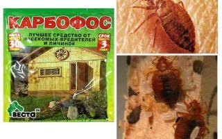 Medverkar karbofos från bedbugs