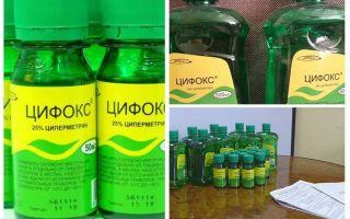 Cyclox botemedel mot bedbugs