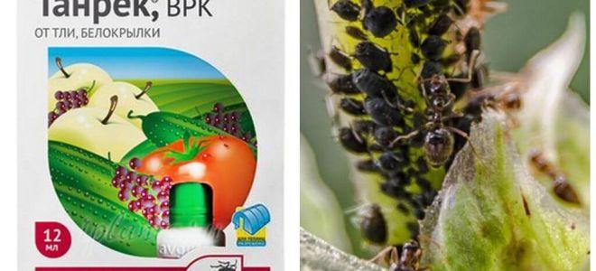Tanrek botemedel mot bladlöss och vitfluga