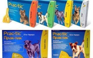 Drops Practices från loppor och fästingar för hundar
