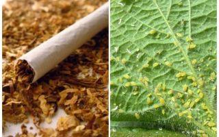 Tobak mot bladlöss