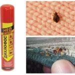 Dichlorvos från bedbugs