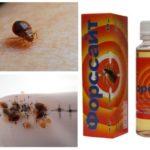 Försyth från bedbugs