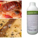 Karbofos från bedbugs
