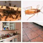 Kackerlackor i huset