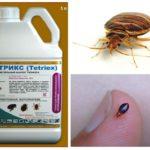 Tetriks från bedbugs
