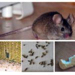 Förekomsten av möss i lägenheten