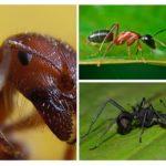 Myr nära upp