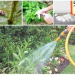 Insektkontrollmetoder