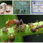 Växter i kampen mot insekter