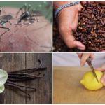 Insektsavvisande metoder