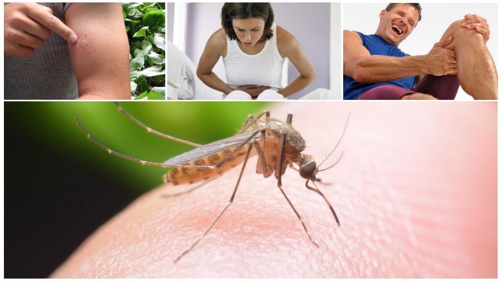 Konsekvenser av malaria myggbett