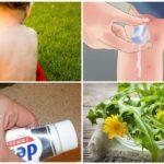 Traditionella recept för behandling av myggbett